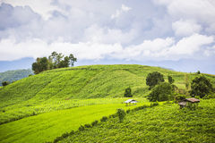 Agriculture field on the hill in Pa Pong Pieng. Chiang Mai ,Thailand. Royalty Free Stock Image