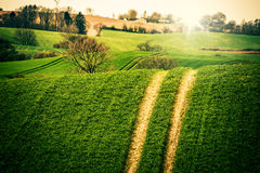 Agriculture field with large tracks Royalty Free Stock Images
