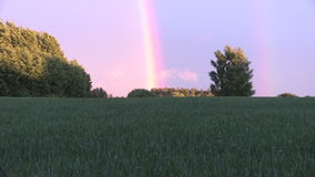 Agriculture field plants and rainbow in sky. Zoom out stock video