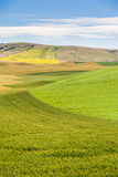 Agriculture field in rural area of Washington state Stock Photo