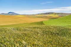 Agriculture field in rural area of Washington state Royalty Free Stock Photo