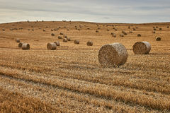 Agriculture , field with straw bales after harvest. Stock Photo