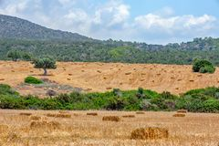Agriculture field with straw bales Royalty Free Stock Photography