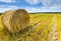 Agriculture field Stock Photo