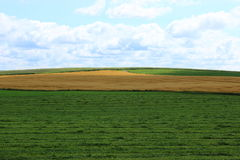 Agriculture field. In summer in Eastern Townships, Quebec Royalty Free Stock Photos