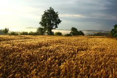 Agriculture field during sunset Royalty Free Stock Photography