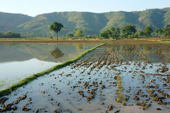 Agriculture field, tree, mountain, reflect Stock Photography
