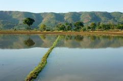Agriculture field, tree, mountain, reflect Stock Photo