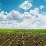 Agriculture field with under cloudy sky Stock Image