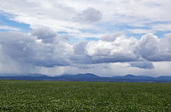 Agriculture Field Under Stormy Skies Stock Image