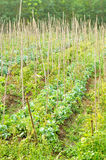 Agriculture field Stock Photography