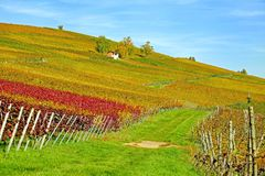 Agriculture, Field, Vineyard, Grassland Royalty Free Stock Images