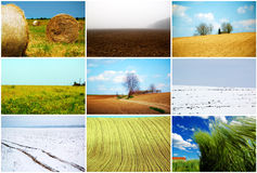 Agriculture fields. Collage of agriculture fields in various seasons Stock Image