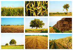 Agriculture collage. Collage of agriculture summer fields Stock Photography