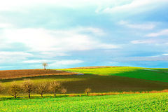 Agriculture fields. Green and brown agriculture fields Stock Image