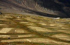 Agriculture fields in himalaya Royalty Free Stock Photos