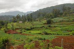 Agriculture and fields in Sri Lanka. The Agriculture and fields in Sri Lanka Royalty Free Stock Image