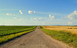 Agriculture fields. In summertime,and path, that runs away. Blue wonderful sky with a few light white clouds on it. Nature beauty. A field of beets on the left Stock Photos