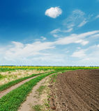 Agriculture fields under blue sky with clouds Stock Photo