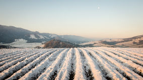 Agriculture fields in winter. Plotted agriculture fields in winter under the snow Stock Images