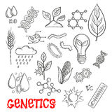 Agriculture and genetic technology sketch icons Royalty Free Stock Photography