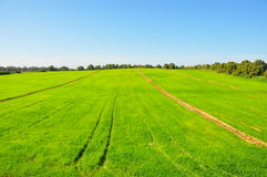 Agriculture Green Crop Fields. Green rows of plants with trees on a clear sunny day royalty free stock images