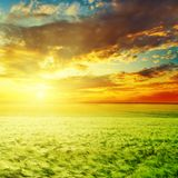 Agriculture green grass field and orange sunset. In clouds Royalty Free Stock Image