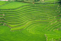 Agriculture Green Rice fields and rice terraced on mountain Royalty Free Stock Photos