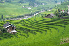 Agriculture Green Rice fields and rice terraced on mountain Stock Photos