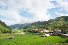 Agriculture Green Rice fields and rice terraced on mountain Royalty Free Stock Photo