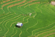 Agriculture Green Rice fields and rice terraced on mountain Stock Images