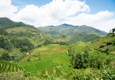 Agriculture Green Rice fields and rice terraced on mountain Stock Photo