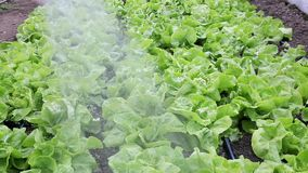 Agriculture greenhouse stock footage