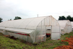Agriculture greenhouse Stock Photo