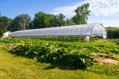 Agriculture greenhouse and gardens with squash plants in the fo. Reground at summer time royalty free stock photos