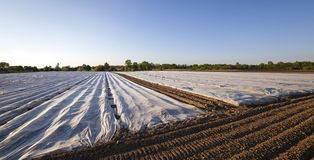 Agriculture. greenhouses Stock Photos