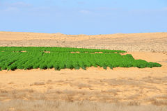 Agriculture - Growing in the Desert Stock Photos
