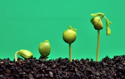 Earth environmental and earth agriculture concept, nature concept. royalty free stock photos