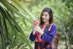 Agriculture. Happy farmer in the field checking  plants during a sunny summer, agriculture and food production concept,Greengrocer organic fresh agricultural Stock Photography