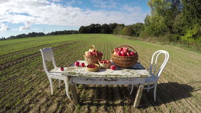 Agriculture harvest concept. Apple baskets on old white table on autumn farm field and clouds. Timelapse 4K stock video