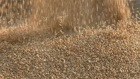 Agriculture, harvest, wheat crop pouring stock video footage