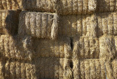 Agriculture hay bale farming. Agriculture hay bale close up Royalty Free Stock Photos