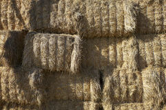 Agriculture hay bale farming Royalty Free Stock Photos