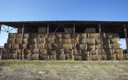 Agriculture hay bale farming Royalty Free Stock Image