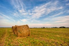 Agriculture hay in summer Royalty Free Stock Photo