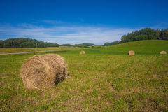 Agriculture Royalty Free Stock Photography
