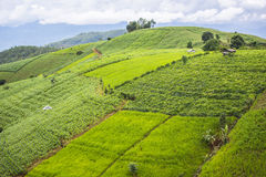 Agriculture on the hill in Pa Pong Pieng. Chiang Mai ,Thailand Stock Photo