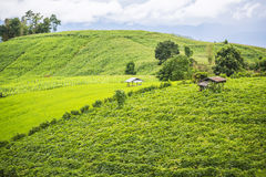 Agriculture on the hill in Pa Pong Pieng. Chiang Mai ,Thailand Stock Photos