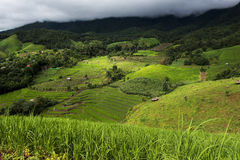 Agriculture on the hill in Pa Pong Pieng. Chiang Mai ,Thailand Royalty Free Stock Images
