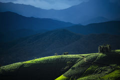 Agriculture on the hill in Pa Pong Pieng. Chiang Mai ,Thailand. Stock Photography